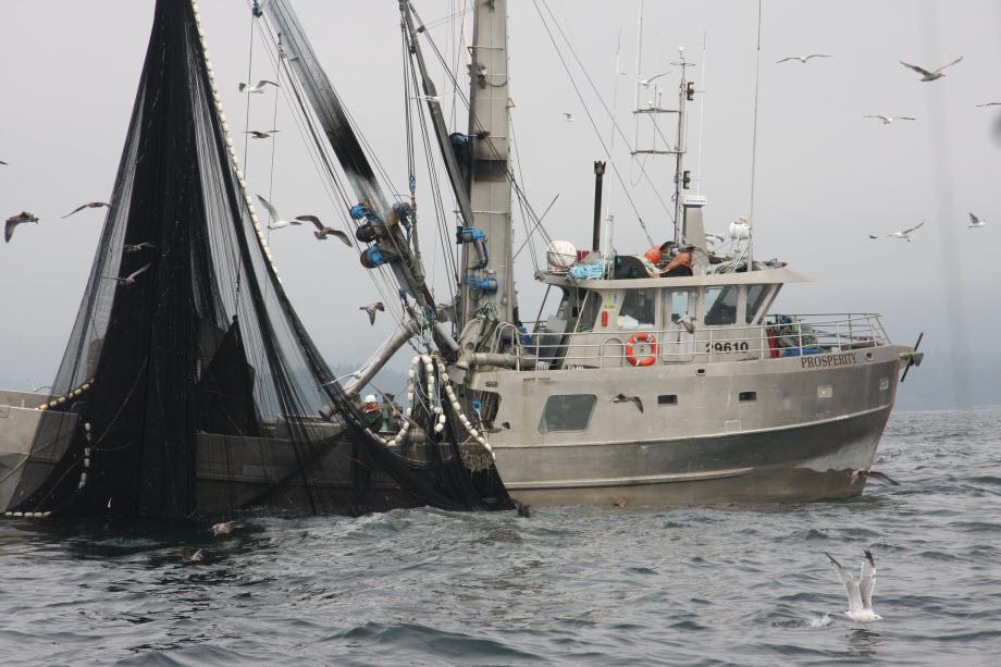 WestCoastFish4141