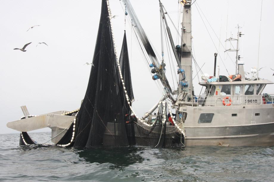 WestCoastFish4147