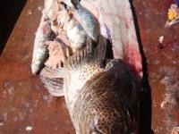 WestCoastFish3676