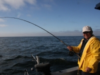 WestCoastFish3704
