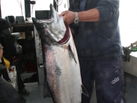 WestCoastFish3723