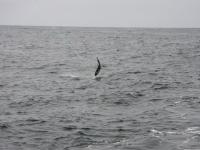 WestCoastFish3741
