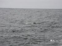 WestCoastFish3742