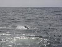 WestCoastFish3744