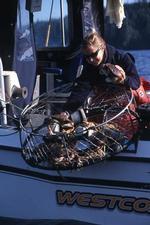 crabing027