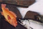 westcoastfish249